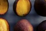 BPTP Lampung lestarikan varietas lokal mangga isem kumbang