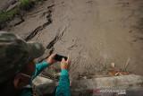 Seorang warga mengambil gambar di tanah perikanan milik warga yang rusak karena terjadi tanah bergerak di Desa Sawang, Kabupaten Tapin, Kalimantan Selatan, Rabu (21/7/2021). Pergerakan tanah tersebut mengakibatkan sejumlah lahan pertanian dan perikanan milik warga rusak. Foto Antaranews Kalsel/M Fauzi Fadillah/Bay.