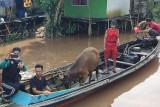 ACT-MRI salurkan kurban di pelosok daerah di Kalteng