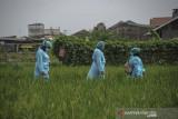 Sejumlah kader Surveilans Berbasis Masyarakat (SBM) berjalan menuju rumah warga yang sedang menjalani isolasi mandiri di Antapani Kidul, Bandung, Jawa Barat, Kamis (22/7/2021). Puskesmas di Kota Bandung memiliki layanan pemberian obat COVID-19 oleh kader SBM guna memberikan rasa aman dan nyaman kepada warga yang sedang menjalani isolasi mandiri di rumahnya. ANTARA FOTO/Raisan Al Farisi/agr