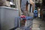 Kader Surveilans Berbasis Masyarakat (SBM) berjalan menuju rumah warga yang sedang menjalani isolasi mandiri di Antapani Kidul, Bandung, Jawa Barat, Kamis (22/7/2021). Puskesmas di Kota Bandung memiliki layanan pemberian obat COVID-19 oleh kader SBM guna memberikan rasa aman dan nyaman kepada warga yang sedang menjalani isolasi mandiri di rumahnya. ANTARA FOTO/Raisan Al Farisi/agr