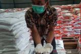 Beras PPKM. Staf Bulog memperlihatkan beras bantuan sosial yang akan disalurkan kepada masyarakat yang terdampak PPKM di Gudang Bulog di Aceh Besar, Kamis (22/7/2021). Bulog menyalurkan 4.261 ton beras bantuan PPKM kepada 426.174 keluarga penerima manfaat di Provinsi Aceh. ANTARA/M Haris SA