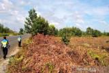 Polda Kalteng antisipasi karhutla di lahan rawan terbakar
