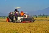 Mentan: Proses tanam-panen padi berlangsung di beberapa daerah jaga ketahanan pangan