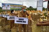 Poktan di Gumas panen jagung hibrida dalam 100 hari