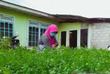 Mendorong masyarakat manfaatkan pekarangan dengan tanami sayuran jadi sumber ekonomi