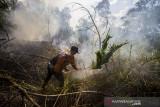 Masyarakat Peduli Api (MPA) berupaya memadamkan kebakaran lahan di kawasan Landasan Ulin Timur, Banjarbaru, Kalimantan Selatan, Senin (26/7/2021).  Kebakaran hutan dan lahan (Karhutla) mulai terjadi di sejumlah wilayah Kalimantan Selatan yang mendekati permukiman penduduk.Foto Antaranews Kalsel/Bayu Pratama S.