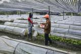 Administratur KPH Ciamis, Sukidi (kanan) memberikan obat vitamin kepada mitra kerja Perhutani di RPH Gadung BPKH Banjar Utara, Kabupaten Ciamis, Jawa Barat, Senin (26/7/2021). Perhutani KPH Ciamis membagikan vitamin, sembako dan masker kepada 579 orang mitra kerja Perhutani di kawasan hutan sebagai bentuk kepedulian terhadap para pekerja selama pandemi COVID-19. ANTARA FOTO/Adeng Bustomi/agr
