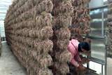 Harga bawang merah berangsur naik jadi Rp26 ribu per kg ditingkat petani Kabupaten Solok