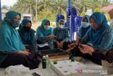 Mahasiswa KKN Desa Lubuk Kembang Sari beri pelatihan hidroponik sistem Wick