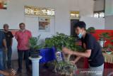 Penggemar bonsai Sambas gali potesi  ekonomi bentuk organisasi