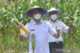 Bupati Sinjai : Hari Tani momentum tingkatkan kesejahteraan petani
