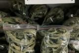 IDI Bandarlampung minta pemerintah segera teliti kandungan daun sungkai