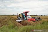 Ketua DPRD Seruyan minta pertanian dimaksimalkan untuk pacu perekonomian daerah