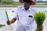 Komoditi Pertanian Sulut 'survive' meski pandemi COVID-19
