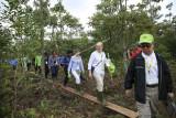 Tanaman vegetasi khas gambut ditanam kembali di SM Padang Sugihan