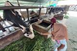 Ini tujuan wisata edukasi peternakan yang tetap eksis saat pandemi COVID-19