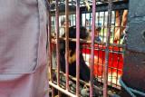 Polres Inhil serahkan Beruang Madu ke BKSDA Riau