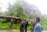 Satgas TNI evakuasi pohon tumbang di jalan Trans Papua