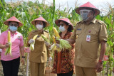 Nilai ekspor komoditi pertanian Sulut triwulan pertama capai Rp1,3 triliun