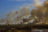 Seekor burung melintas dengan latar belakang lahan yang terbakar di Desa Ujung Batu, Kabupaten Tanah Laut, Kalimantan Selatan, Minggu (1/8/2021). Berdasarkan data Kementerian Lingkungan Hidup dan Kehutanan (KLHK) selama periode 1 Januari hingga 30 Juni 2021, luas kebakaran hutan dan lahan (Karhutla) di Provinsi Kalimantan Selatan mencapai 876 hektare serta Badan Meteorologi Klimatologi dan Geofisika (BMKG) telah mengeluarkan peringatan dini musi kemarau yang dapat meningkatkan potensi terjadinya Karhutla. Foto Antaranews Kalsel/Bayu Pratama S.