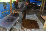 PANEN TEMBAKAU DI ACEH BESAR. Petani merajang daun tembakau saat memasuki musim panen di desa Lambeugak, Kecamatan Kuta Cot Glie, Kabupaten Aceh Besar, Aceh, Minggu (1/8/2021). Kelompok tani di daerah  sentra penghasil tembakau tersebut menyatakan, usaha perkebunan tembakau tetap berjalan normal di tenga pandemi COVID-19, namun harga penjualan tembakau yang menurun hingga 25 persen menjadi  Rp800.000 per karung (20 kilogram) menurut jenis dan kualitasnya akibat lesunya permintaan pasar. ANTARA FOTO/Ampelsa.