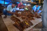 PETANI PANEN TEMBAKAU DI ACEH BESAR. Petani mempersiapkan daun tembakau sebelum dirajang saat memasuki musim panen di desa Lambeugak, Kecamatan Kuta Cot Glie, Kabupaten Aceh Besar, Aceh, Minggu (1/8/2021). Kelompok tani di daerah  sentra penghasil tembakau tersebut menyatakan, usaha perkebunan tembakau tetap berjalan normal di tenga pandemi COVID-19, namun harga penjualan tembakau yang menurun hingga 25 persen menjadi  Rp800.000 per karung (20 kilogram) menurut jenis dan kualitasnya akibat lesunya permintaan pasar. ANTARA FOTO/Ampelsa.