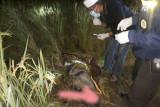 Geger, penemuan mayat perempuan mukanya penuh darah di sawah Batukliang