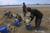 Pedagang dan pengelola wisata membersihkan sampah di pantai Balongan Indah, Indramayu, Jawa Barat, Selasa (3/8/2021). Aksi tersebut sebagai upaya menjaga kebersihan pantai wisata meski masih dalam masa Pemberlakukan Pembatasan Kegiatan Masyarakat (PPKM). ANTARA FOTO/Dedhez Anggara/agr