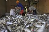 Pekerja mengumpulkan kerupuk kulit ikan di desa Kenanga, Indramayu, Jawa Barat, Selasa (3/8/2021). Pengusaha kerupuk kulit ikan mengaku saat Pemberlakuan Pembatasan Kegiatan Masyarakat (PPKM) tetap berproduksi, meskipun dengan mengurangi jumlah produksi hingga 50 persen dari kondisi normal. ANTARA FOTO/Dedhez Anggara/agr