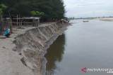 Sudah sejauh ini, Pantai Sasak di Kampung Muaro Pangguang Kiambia Ampek terkikis abrasi