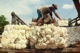 Peneliti: Kelembagaan petani karet harus diperkuat dongkrak harga
