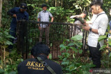 ini dilakukan KSDA Agam untuk evakuasi beruang madu di kebun durian warga