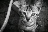 Hari kucing sedunia, ini fakta menarik soal kucing yang perlu kau tahu