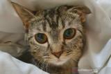 Hari kucing sedunia, ni fakta menarik  soal kucing yang perlu kamu tahu