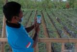 Kementan bangun 2.358 kampung  hortikultura pada 2022