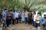 Pesisir Selatan daerah prioritas Peremajaan Sawit Rakyat (PSR)