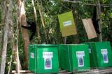 BKSDA Sumatera Selatan lepasliarkan tiga  ekor owa siamang