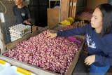 Fluktuasi harga bawang merah di Nunukan