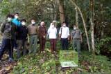 BKSDA lepasliarkan kukang barang bukti kejahatan perdagangan satwa dilindungi ke hutan Cagar Alam Maninjau