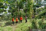 Basarnas hentikan pencarian pria hilang di hutan Kolaka Timur