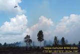 Kebakaran hutan dan lahan landa Muara Medak Musi Banyuasin