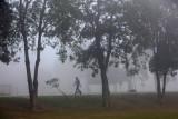 Bersihkan udara kota, Pakistan tanam 10 miliar pohon
