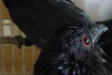 Karantina Pertanian Lampung gagalkan lagi penyelundupan 458 ekor burung