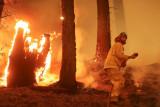 Kebakaran hutan landa California, suhu meningkat