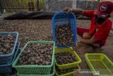 Kemiri Sigi Dipasarkan Hingga Kalimantan