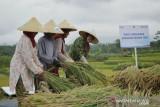 Penyaluran kredit mikro BRI ke sektor pertanian capai Rp161,6 triliun