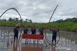 BKSDA Sultra peringati HUT ke-76 RI dengan tanam 3.300 pohon mangrove