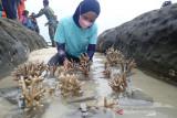 Bupati Natuna ingin penanaman  terumbu karang  yang diinisiasi ANTARA terus berlanjut