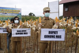 Bupati Gumas beberkan kemajuan program budidaya jagung hibrida